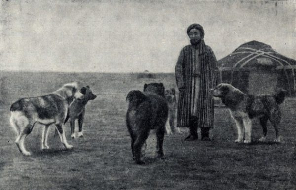 Алабай был верным спутником кочевых племен