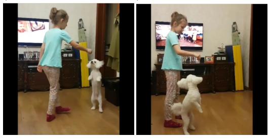 Бишон Фризе ласково общается с детьми, становится хорошим другом для любого человека