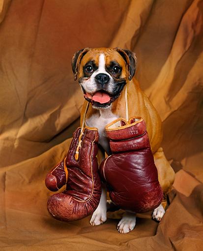 Боксер на клубной фотосессии