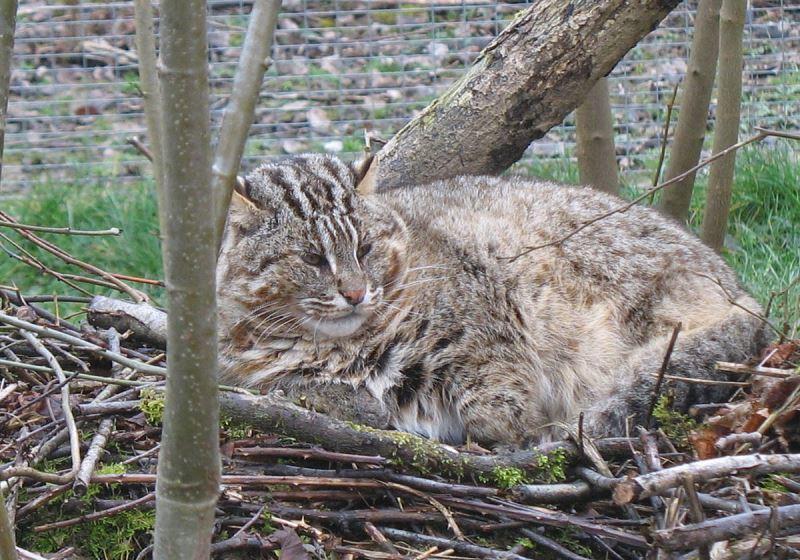Будучи окружены людьми и другими животными, коты остаются замкнутыми и осторожными