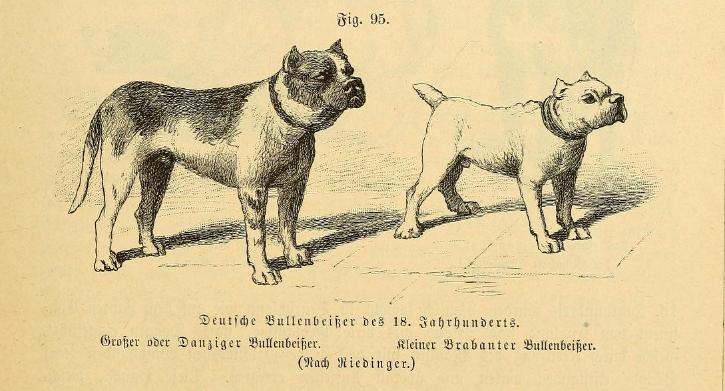 Булленбейсер - один из предков немецкого боксера