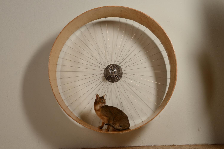 Велосипедное колесо для кошек