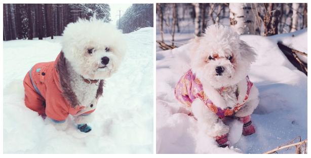 В холодное или дождливое время года необходимо одевать собаку