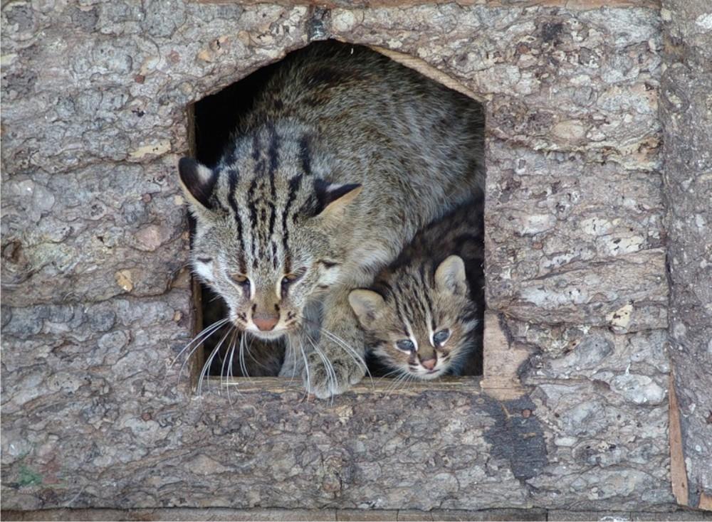 Даже в безопасных домашних условиях кошка не перестает прятать котят в надежные места
