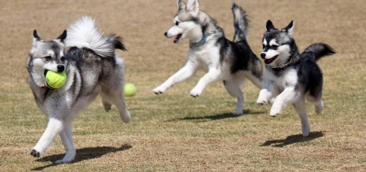 Движение это жизнь для молодых собак