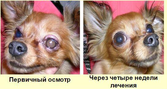 До и через четыре недели лечения блефарита