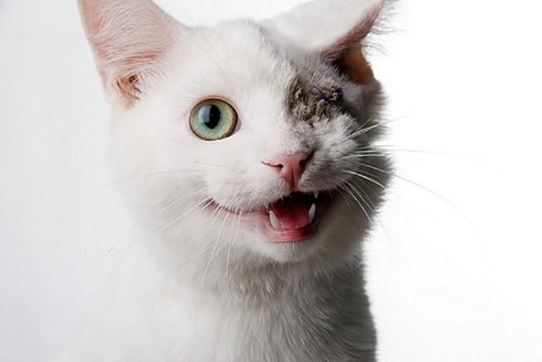 Жизнь котов на свободном выгуле всегда заканчивается плохо, даже если вам кажется, что они нуждаются в прогулках. В том числе многие гуляющие сами по себе домашние коты погибают от абсцессов, или лишаются жизненно важных органов