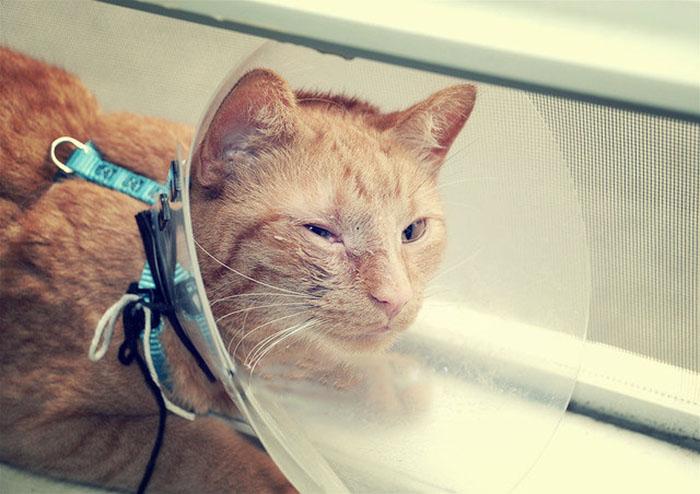 Защитный колпак для котов против расчесывания глаз
