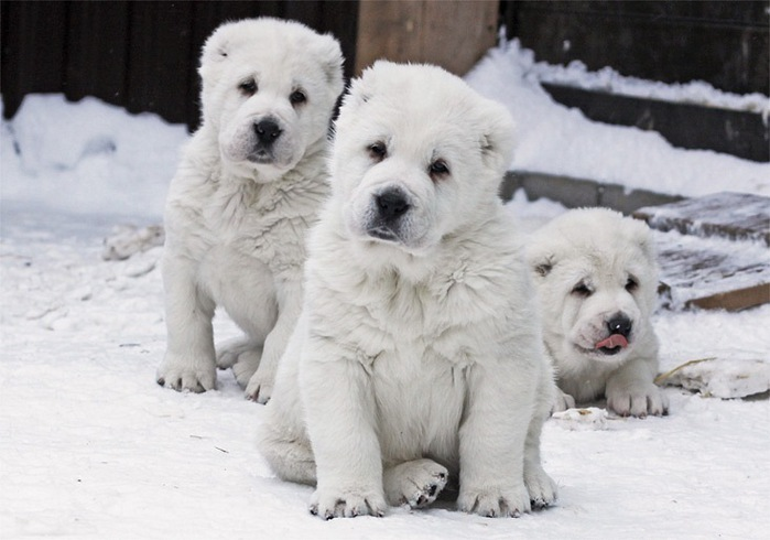 Знакомство со всем семейством щенка позволяет лучше понять нрав будущего четвероногого друга