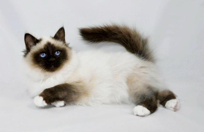 Кормить кошек нужно строго дважды в день