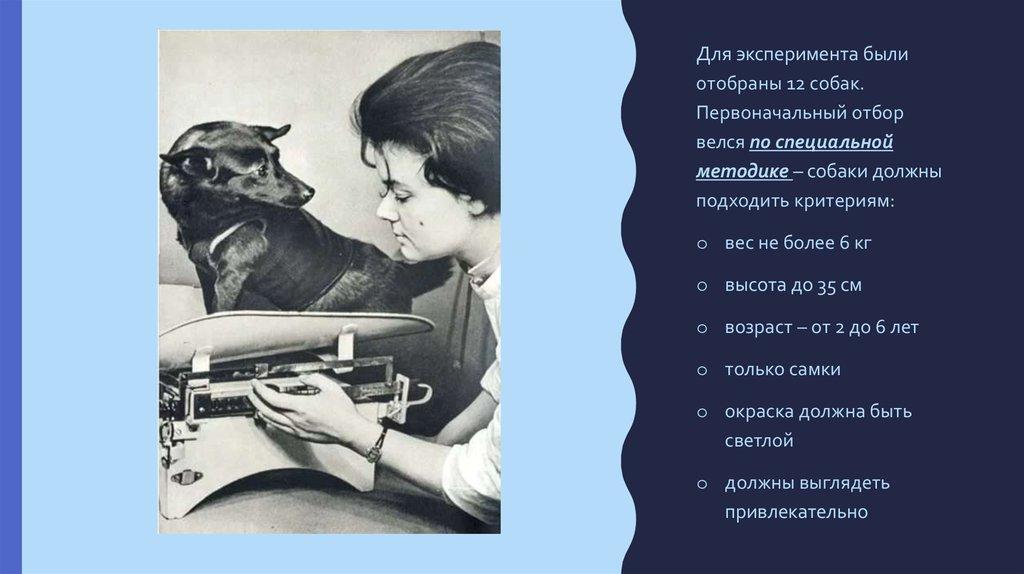 Критерии предъявляемые к собакам