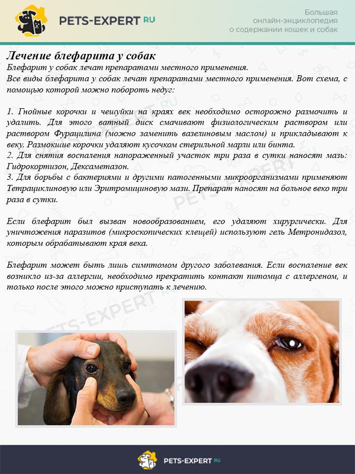 Лечение блефарита у собак
