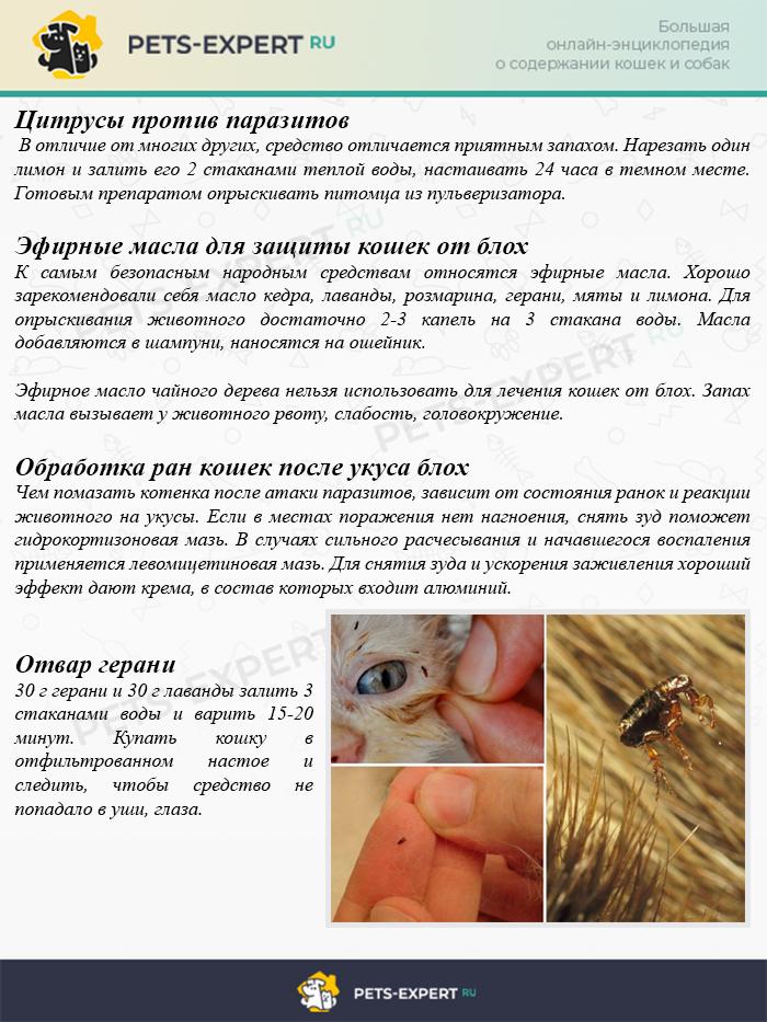 Лечение блох у кошек народными средствами