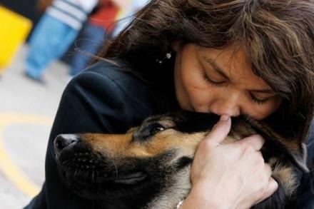 Любая собака отдаст за хозяина жизнь. Отблагодарить ее за такую любовь человек может заботой о ее здоровье и комфорте