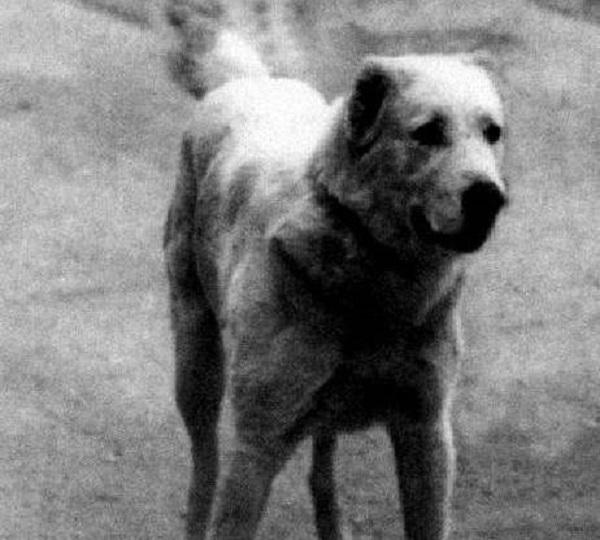 Многократные победы в боях не могли заменить Белому Екемену его пристрастие к охране доверенных животных