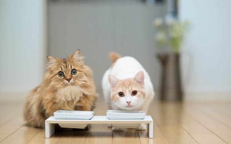 Неправильно подобранный корм может стать причиной развития глазных заболеваний у кошек