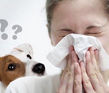 Не всегда человек, реагирующий на собак, имеет аллергию именно на них