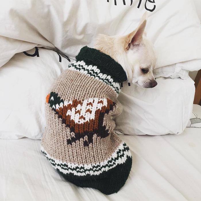 Очень важно следить за тем, чтобы зимой собака не мерзла