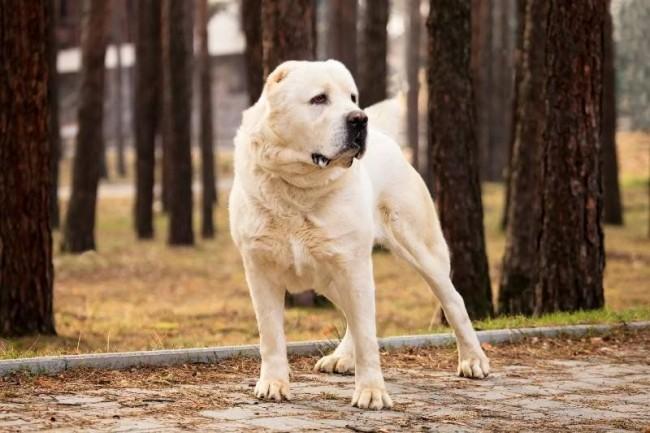 Периодическое вычесывание пса облегчит ему весеннюю смену шерсти