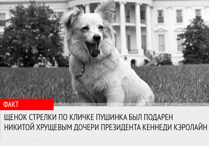 Подарок Никиты Хрущева Кеннеди Кэролайн