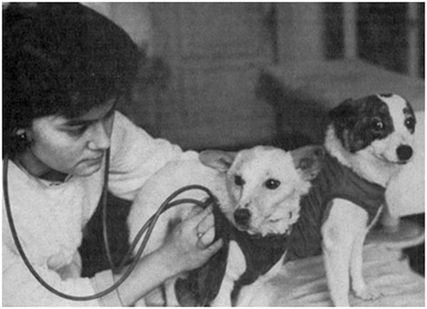 Подготовка к полету собак проходила под круглосуточным контролем множества специалистов-медиков и лаборантов