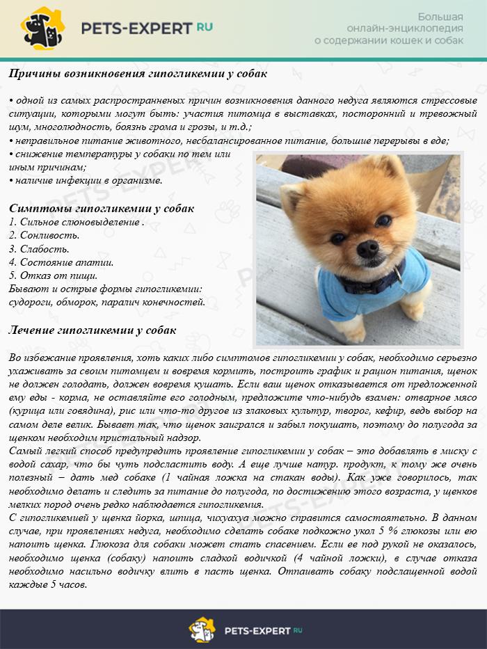 Причины возникновения гипогликемии у собак,симптомы, лечение