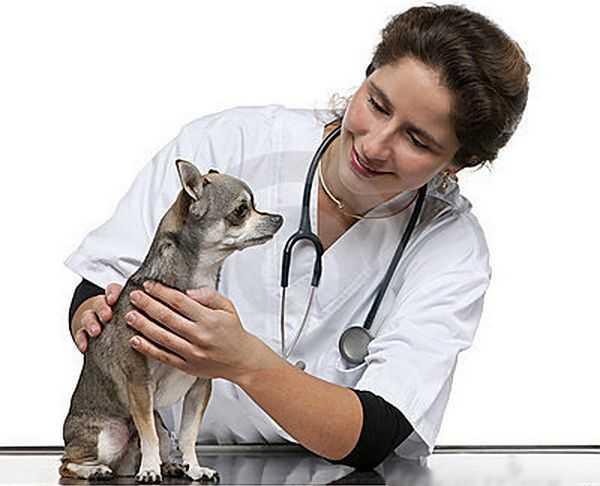 При подозрении на заболевание необходимо обратиться к ветеринару