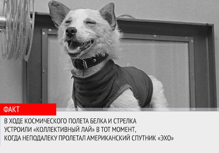 """Реакция Белки и Стрелки на американский спутник """"Эхо"""""""
