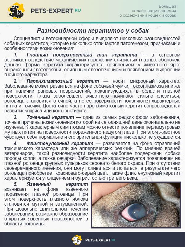 Разновидности кератитов у собак