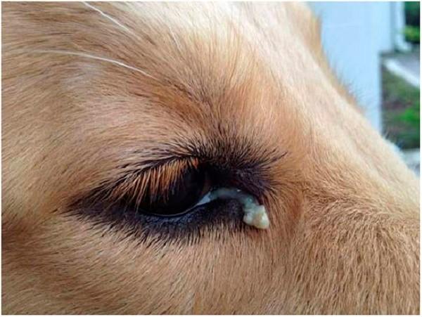 Серозные выделения из глаз и носа часто сопровождают данную болезнь