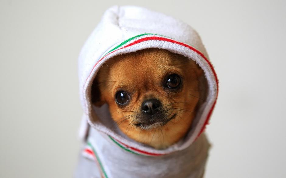 Собака может дрожать из-за холода
