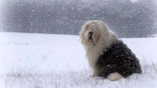 Собака прекрасно себя чувствует даже при низкой температуре на улице