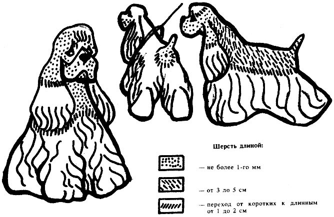 Схема стрижки американского кокер спаниеля