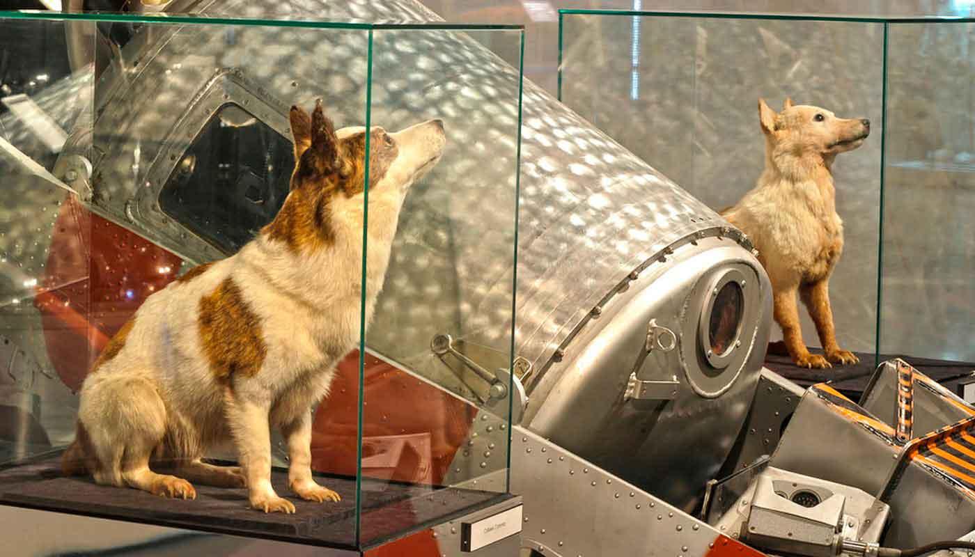Чучела животных в музее космонавтики в Москве