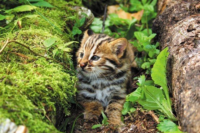 Котята рано обнаруживают в себе неутомимых исследователей