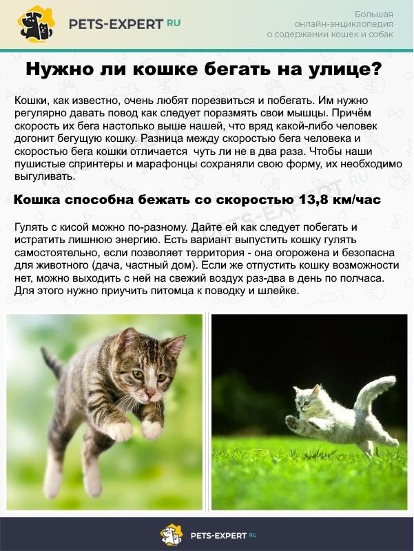 Двигательная активность для кошек крайне важна