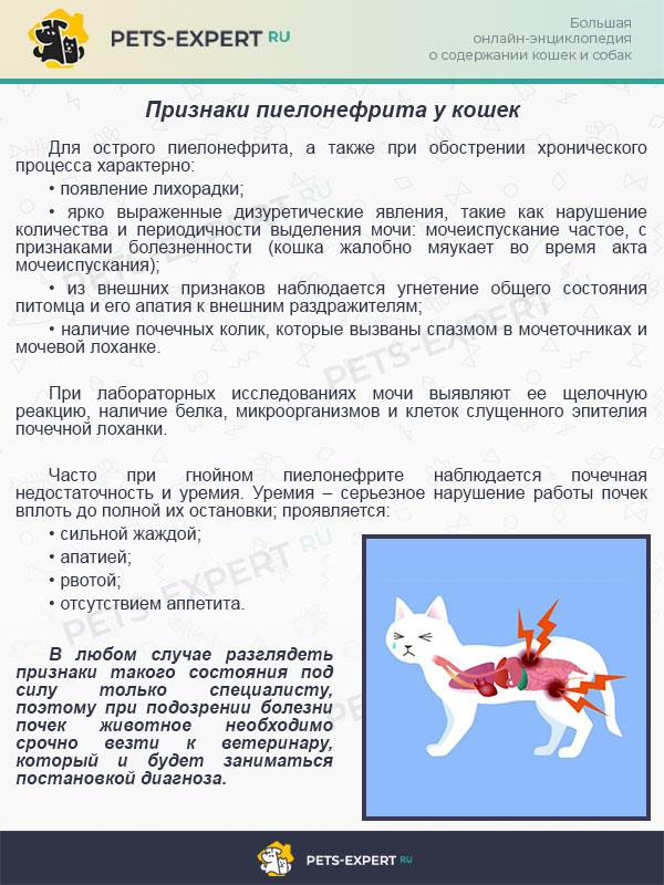 Признаки пиелонефрита у кошек
