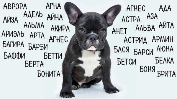 Выбираем английскую кличку для собаки