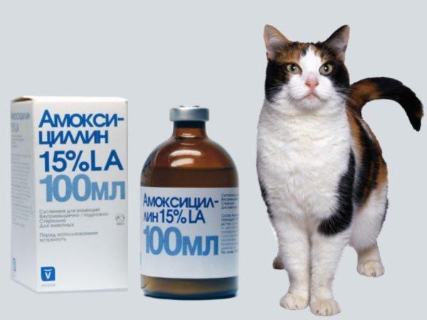 Инструкция по применению Амоксициллина для кошек