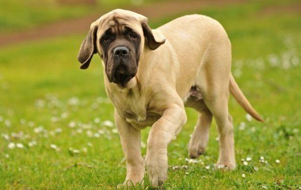 Подбирая собаке имя, лучше всего ориентироваться на породные особенности животного