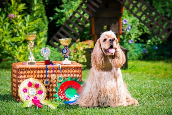 Правильное питание поможет избежать проблем со здоровьем собаки