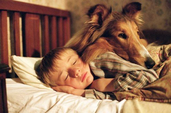 В семьях, где дети растут с собаками, практически не встречается аллергиков