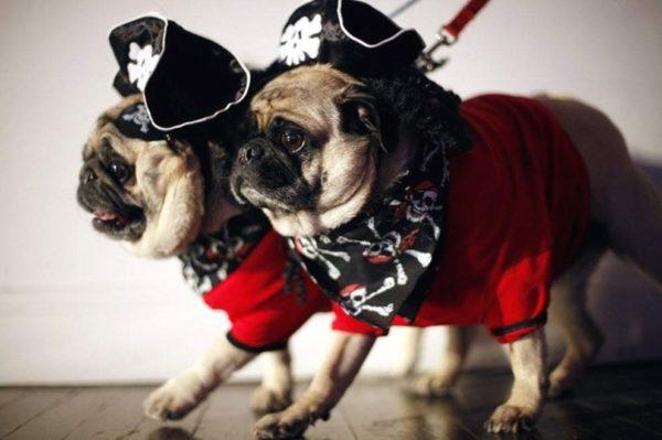 Некоторые собаки столь харизматичны, что придумать им кличку не составляет труда