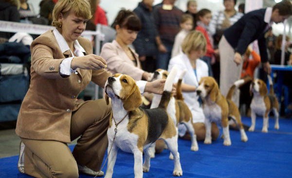 """""""Бракованные"""" щенки не могут участвовать в выставках"""