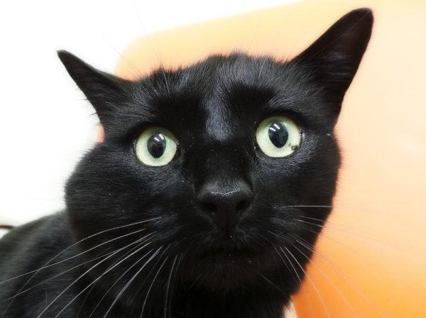 Абсцесс у кота