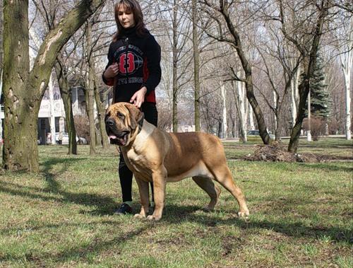 Дрессировка - важная часть воспитания любой собаки