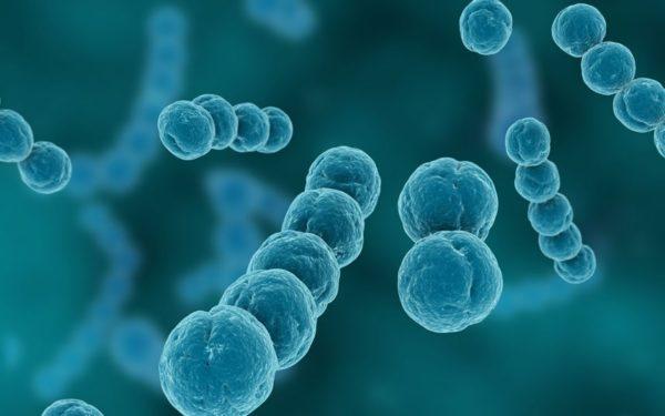 Именно при размножении зловредных организмов, входящих в класс гноеродных, и образуется жидкое вещество в ранке