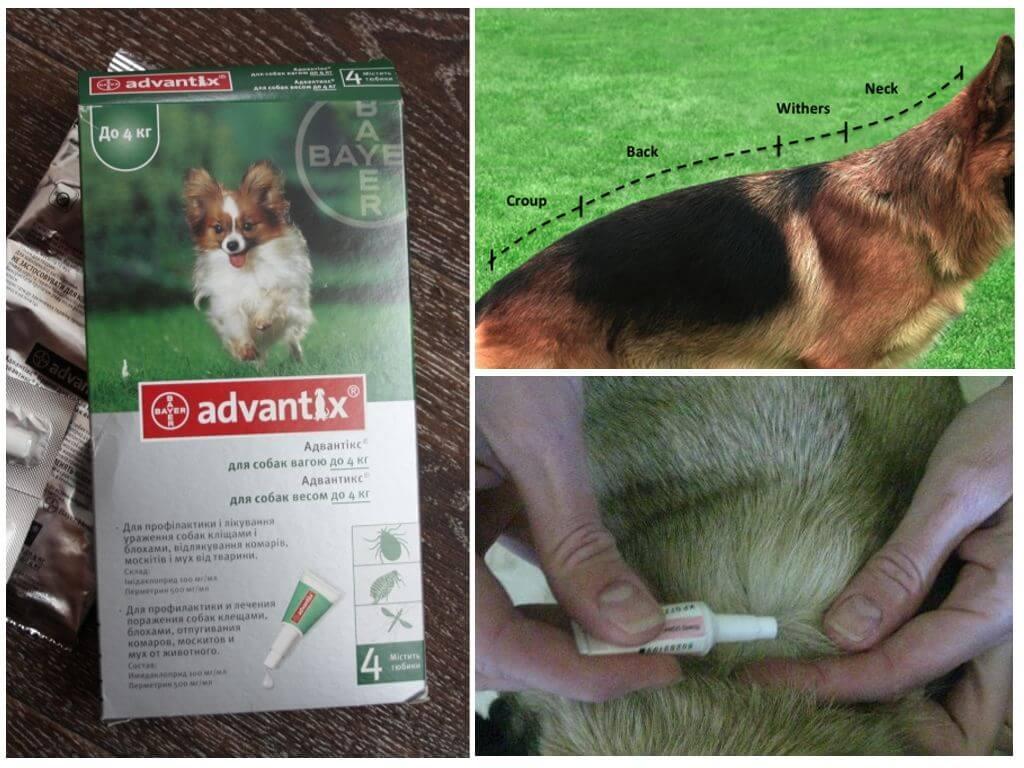 Наносить Адвантинс нужно вдоль позвоночника собаки