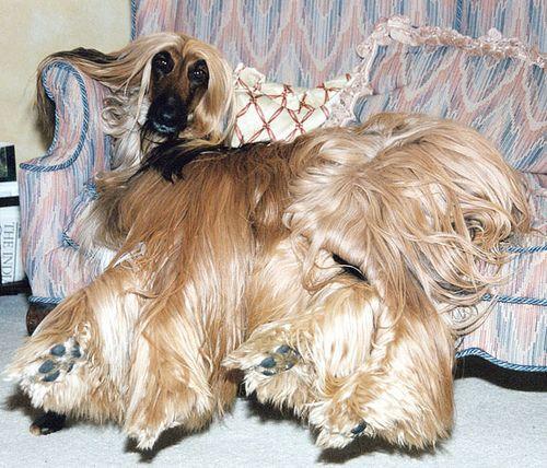 В специальное место собака будет уходить, когда внимание от хозяев вымотает ее