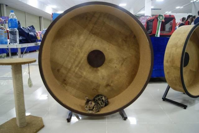 Вес деревянного тренажёра от двух килограммов и более.